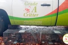 Grade A Critter