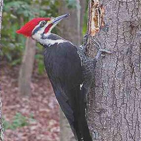 Woodpecker Prevention