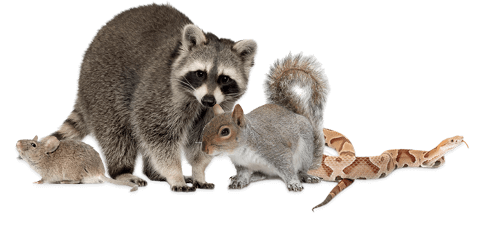 ONE OF ATLANTA'S TOP CRITTER CONTROL SPECIALISTS