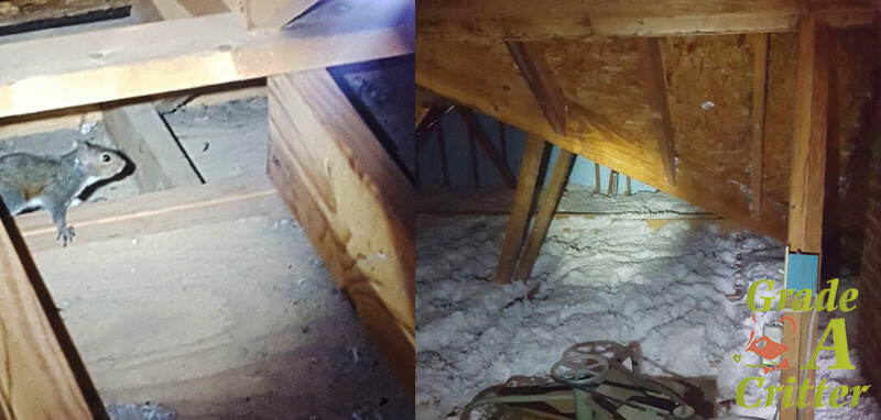 Attic inspections for nuisance noises