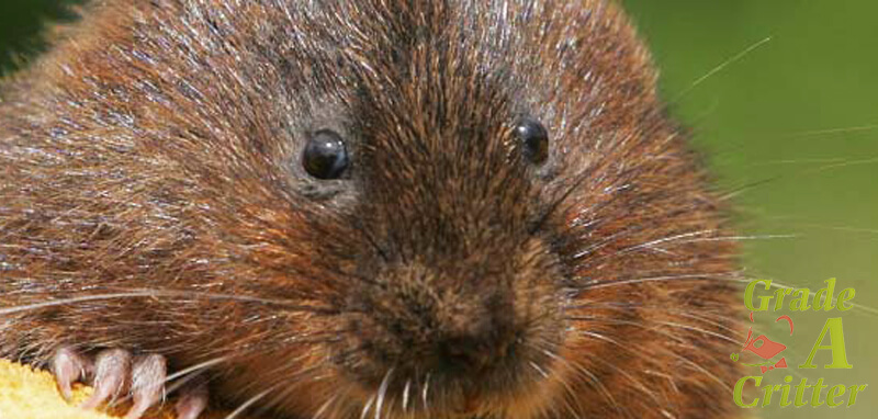 Mole, Vole, and Gopher Removal Services