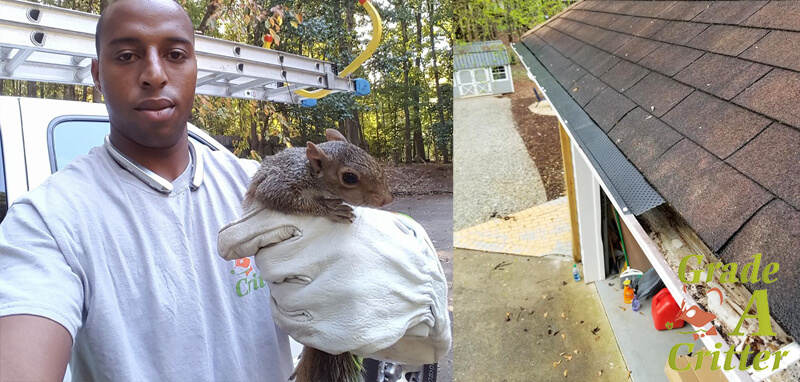 Squirrel Trapping & Removal Services.