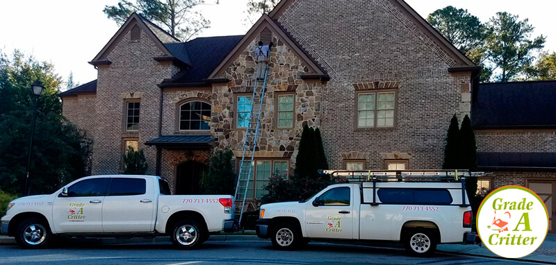 Wildlife Removal in Alpharetta GA