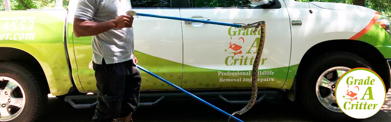 Pest Control Services: Snake Removal