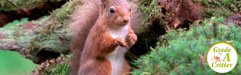 Wildlife Removal Services: Squirrel Control