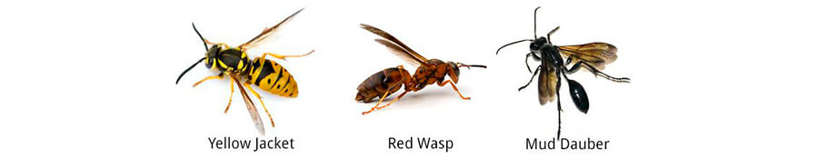 Wasp control measures