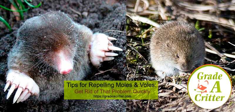 Tips for Repelling Moles & Voles
