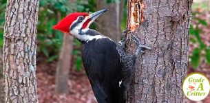 How to Get Rid of Woodpeckers - Bird Removal