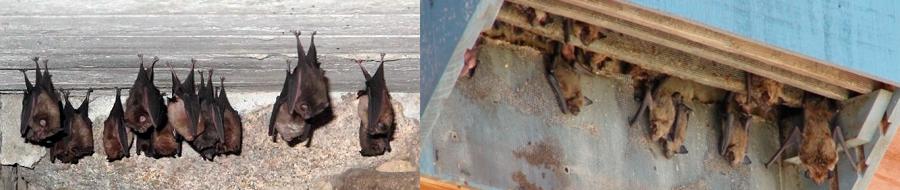 Decoy bat house