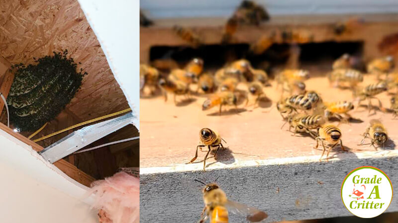 Learn How To Get Rid of Honey Bees at Home