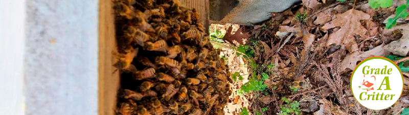 How to Prevent Bees from Appearing?