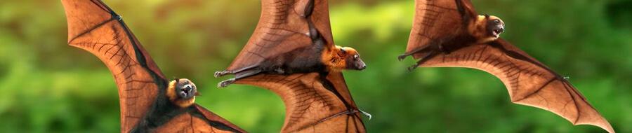 Bat repellents