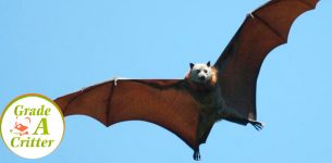 Is there a way to remove bats without harming them?