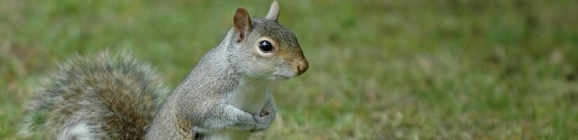 Info about types of squirrels found in Georgia