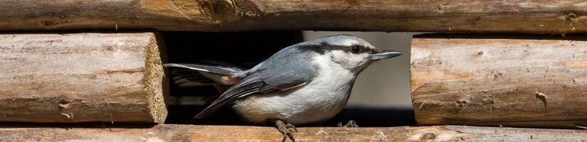 Damage Repairs & Wildlife Exclusions: Keep Critters Out