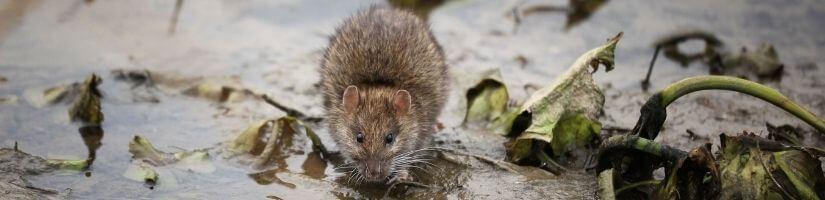 Wildlife Removal in Marietta GA: 24/7 Emergency Solutions!