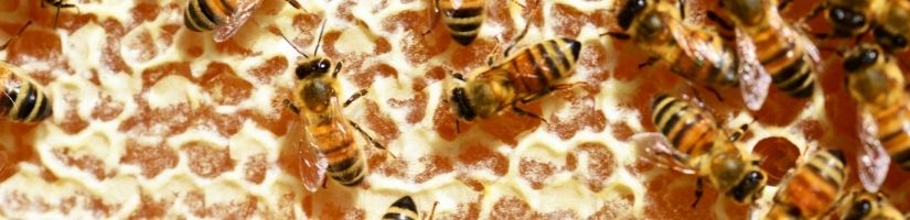 How to Scare Away Bees without Killing Them: Tips, Tricks and Natural Repellants