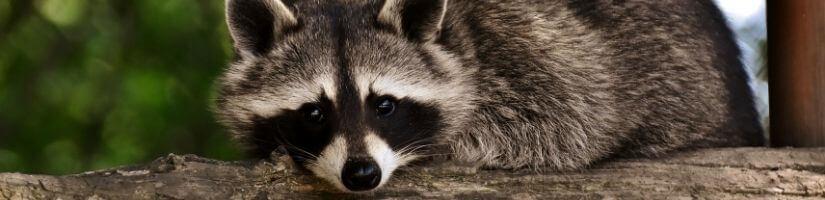 Raccoon proof bird feeders
