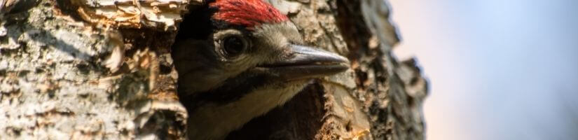 Repair Holes in Your Home to Discourage Woodpeckers