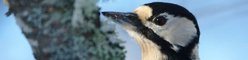 How Can We Scare Away Woodpeckers?