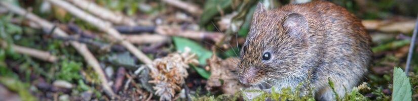 Seal Your Trash to Make Sure Voles Don't Visit You