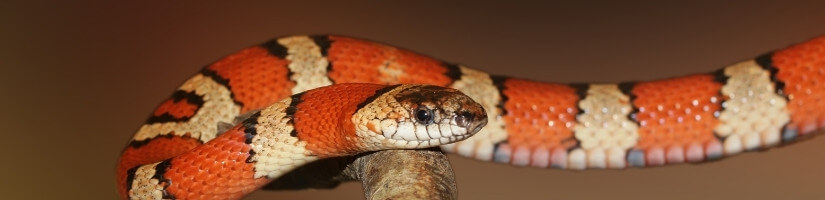 Snake Removal & Control Services: Get Immediate Help