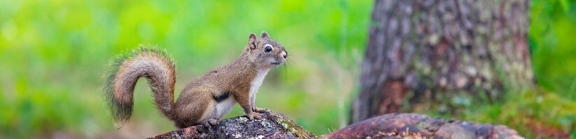 Squirrels: The Chewing Trouble!