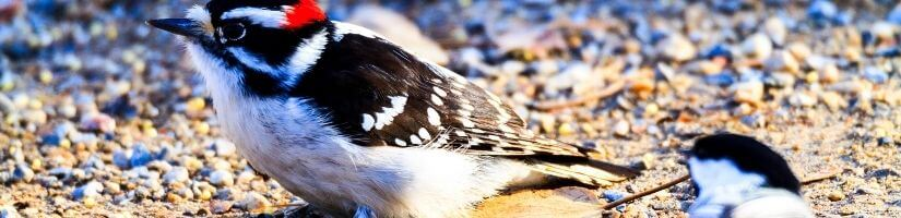Use Aluminum Foil to Deter the Woodpecker