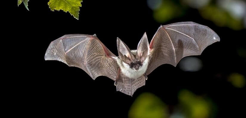 Wildlife Removal in Atlanta GA: On-Time, 24/7  All-Inclusive