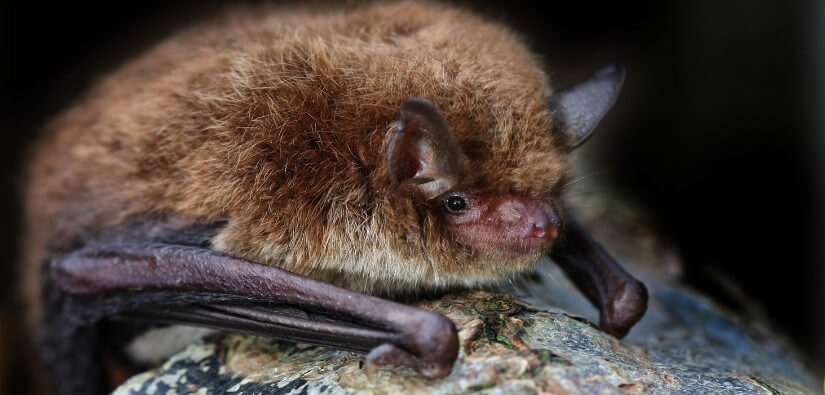 Grade A Critter Provides Humane & Professional Wildlife Removal. Call Us. 24/7
