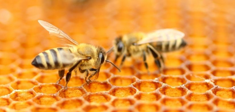 Getting Rid Of Honey Bees Is Easy When You Call Grade A Critter