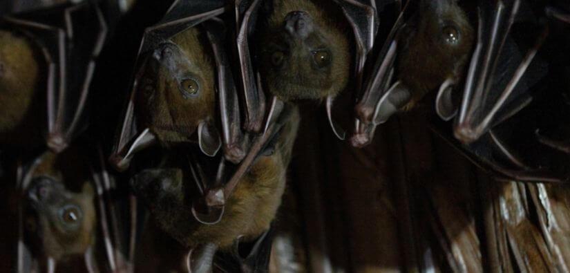 Mirrors - Bat Removal