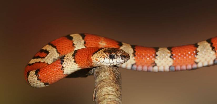 Snake Trapping, Removal, & Prevention