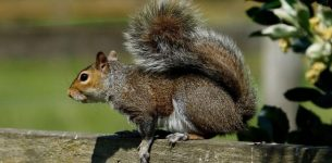 Which is the most humane way to remove a squirrel nest?