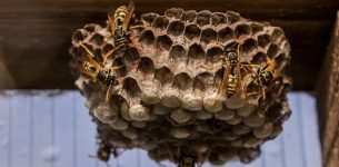 Did you know that you have 8 Wasp & Hornet nest removal options?