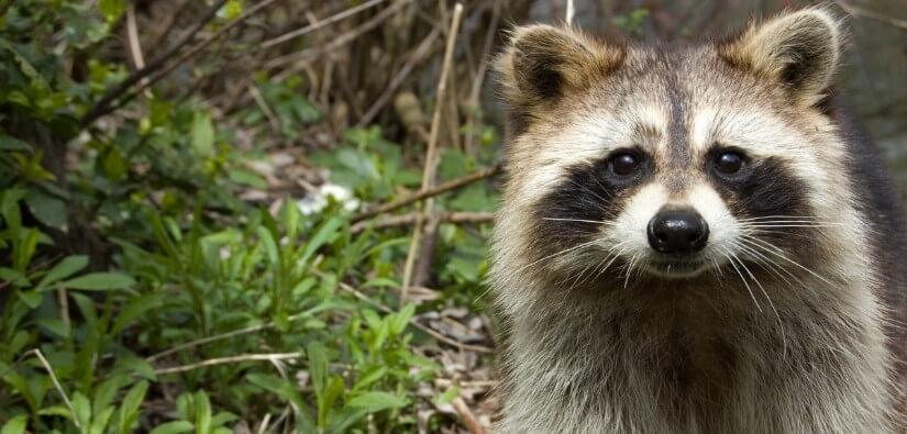 Wildlife Removal in Alpharetta GA