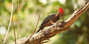 Learn How to Get Rid of Woodpeckers Quickly in Four Easy Steps