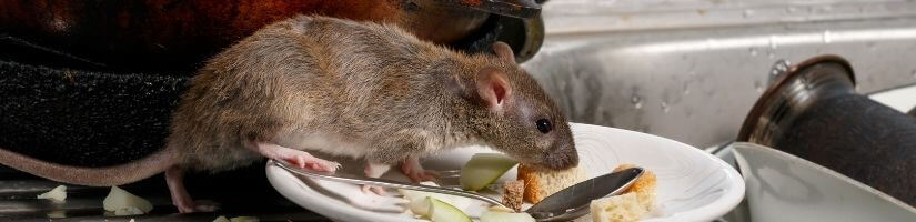 24/7 Emergency Wildlife Removal Services in Duluth Georgia!