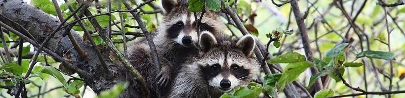 24/7, On-Time & All-inclusive Wildlife Removal in Lawrenceville, Georgia: