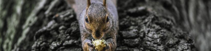 Myth no.5: Animal control won't pick up squirrels