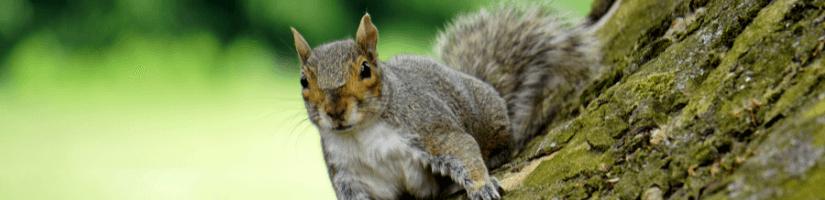 Myth no.3: Squirrel removal products guarantee squirrel removal