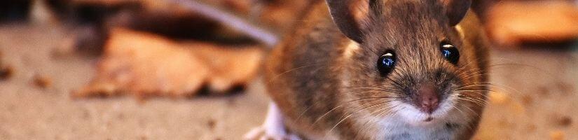 Grade a Critter- Quick, Safe & Humane Wildlife Removal in Canton, Georgia