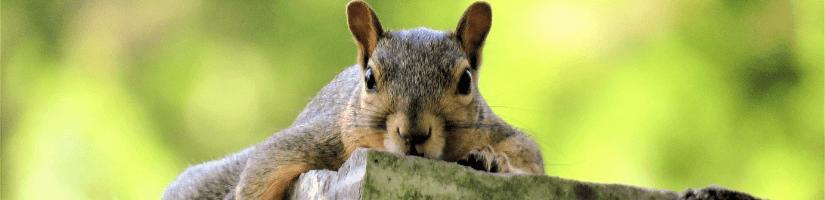 Myth no.1: Rat poison will kill squirrels
