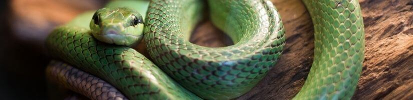 Immediate Help: Snake Removal & Control Services