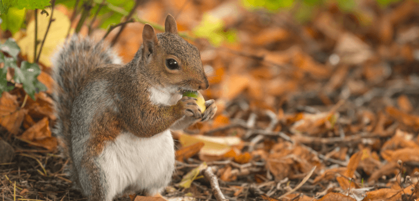 Five squirrel removal myths every homemaker should know
