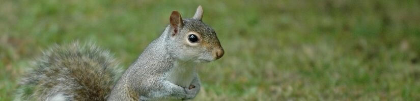 Quick and Effective Squirrel Removal & Pest Control in Norcross, Georgia