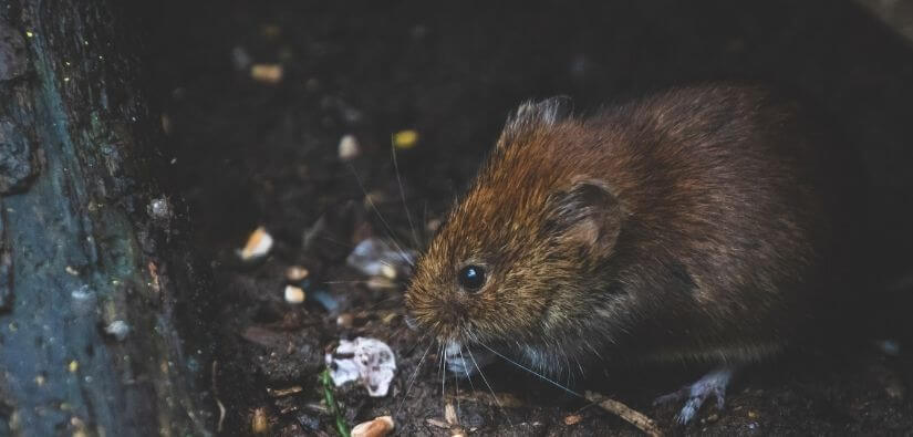 Top 24/7 Wildlife Removal in Acworth, Georgia Expert