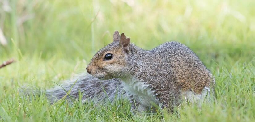 24/7 Emergency Service Wildlife Removal in Canton, Georgia