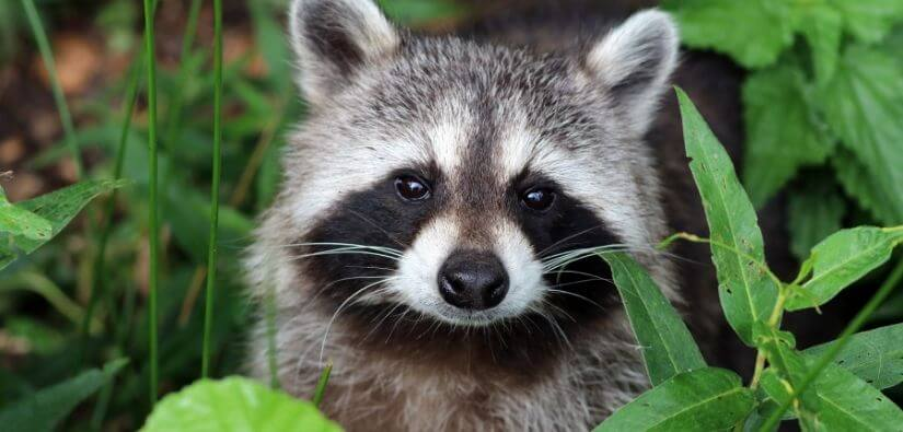 Grade A Critter for 24/7 Wildlife Removal in Norcross, Georgia