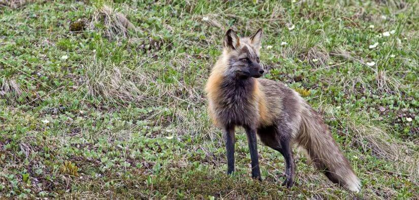 Effective, Safe & Humane Wildlife Animal Removal in Lawrenceville, Georgia: Call Now!